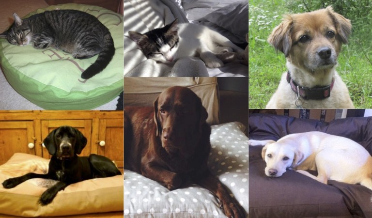 Pets_together-768x450